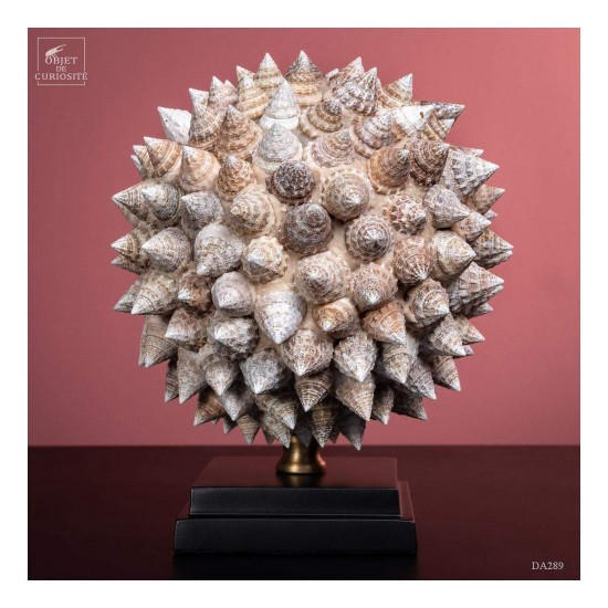 Ball made of Trochus...